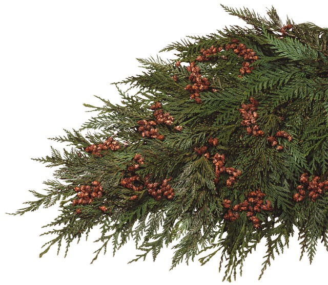 Coned Cedar Boughs