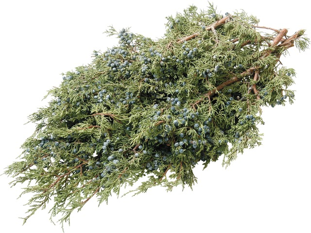 Juniper Boughs