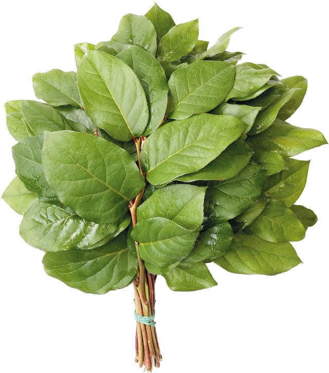 Salal Bouquet Tips