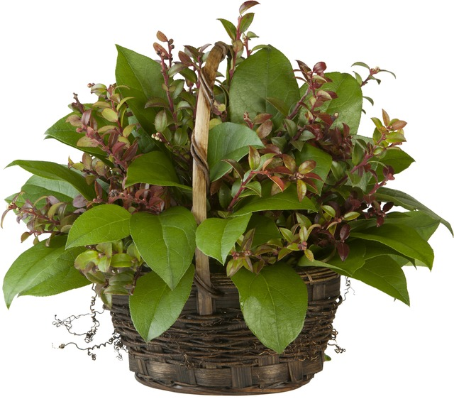 Western Greens Basket Centerpiece