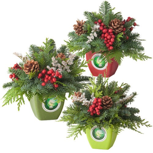 Gogreener Grab'n Go Centerpiece